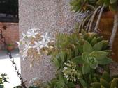 復旦社區園藝花種:DSC03205.JPG