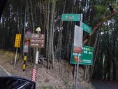 東勢大雪山半日賞鳥:DSC07774.JPG