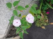 107~108年,復旦社區新的花草:DSC05689.JPG