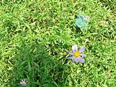菊科植物:P2140623