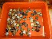 龜吼漁港-珍如意餐廳:DSC08642海蛤蠣.JPG