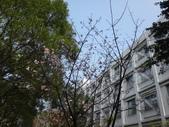 復旦三月花朵:DSC02721.JPG