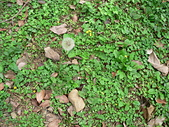 菊科植物:P1950035