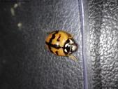 復旦-新天母公園的昆蟲107/1:DSC00090.JPG