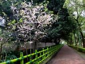 復旦三月花朵:DSC02887.JPG
