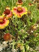 菊科植物:235322.jpg