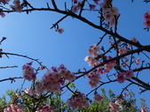 文化公園(原復旦公園)賞櫻花與小紅果:DSC01792.JPG