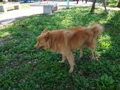 愛犬再次失蹤一天一夜:DSC09648Yuni.JPG