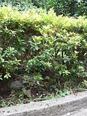 野生菇蕈天地 970810/971026日本北海道:P2220817