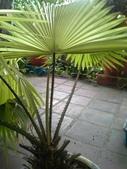 老友台北家盆栽植物:13810.jpg