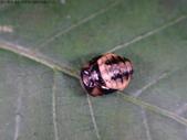 復旦-新天母公園的昆蟲107/1:DSC09799.JPG