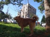愛犬再次失蹤一天一夜:DSC09655愛犬.JPG
