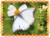 昆蟲問安卡-午安:午安!台灣粉蝶(雄).jpg