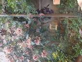 107~108年,復旦社區新的花草:DSC08008.JPG