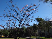 文化公園(原復旦公園)賞櫻花與小紅果:DSC01785.JPG