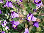草本類植物:P2070474.JPG