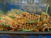 龜吼漁港-珍如意餐廳:DSC08650.JPG