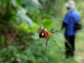 雙溪丁蘭谷生態園區的蜘蛛:DSC03880.JPG