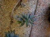 復旦社區園藝花種:DSC03201.JPG