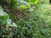 雙溪丁蘭谷生態園區的蜘蛛:DSC03889.JPG