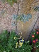 復旦社區園藝花種:DSC03202.JPG