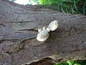 野菇蕈-復旦109~110年:DSC08498.JPG