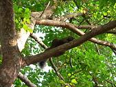 哺乳綱 (貂科、熊科、蝙蝠、松鼠、袋鼠、海豚、鯨魚、海獅):P2280855