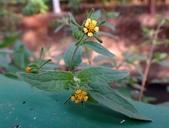 復旦三月花朵:DSC03086.JPG