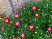 復旦社區園藝花種:DSC03207a.jpg