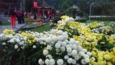 菊科植物:13120士林官邸.jpg