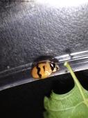 復旦-新天母公園的昆蟲107/1:DSC00080.JPG