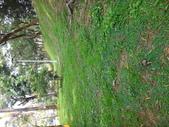 野菇蕈-復旦109~110年:DSC09574.JPG