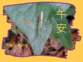 昆蟲問安卡-午安:午安!大稻緣椿象.jpg