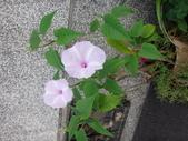 107~108年,復旦社區新的花草:DSC05690.JPG