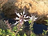 草本類植物:P2270494