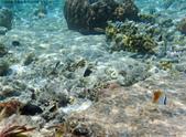 馬爾地夫-印度洋的淺海生物:P7120449a.jpg