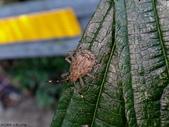 大雪山昆蟲與蜘蛛:DSC07830.JPG