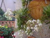 復旦社區園藝花種:DSC03204.JPG