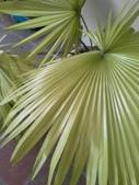 老友台北家盆栽植物:13809.jpg