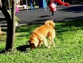 愛犬再次失蹤一天一夜:DSC09588.JPG