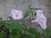 107~108年,復旦社區新的花草:DSC05692.JPG
