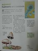 野生菇蕈天地 96.2.11桃園復旦~98.4.18高雄~100.10.7~101.5.11:蘑菇和傘菌.JPG