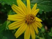 雙溪-老農夫生態農莊及虎豹潭的植物:DSC03502.JPG