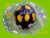 昆蟲問安卡-午安:午安!六星瓢蟲.jpg