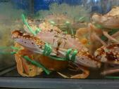 龜吼漁港-珍如意餐廳:DSC08651萬里蟹裝可愛.JPG