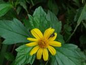 雙溪丁蘭谷生態園區的蜘蛛:DSC03903.JPG