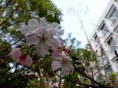 復旦三月花朵:DSC02726.JPG