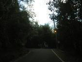 二度探索大雪山林道生態:IMG_8893.JPG