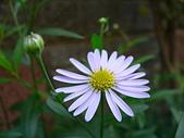 菊科植物:P2110358