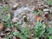 菊科植物:P1940881
